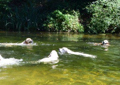Heerlijk zwemmen.....